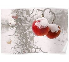 Winter Apples Poster