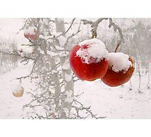 Winter Apples Photographic Print