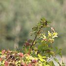 Hummingbird by Kathi Arnell