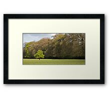 Fairy tree in Ireland Framed Print