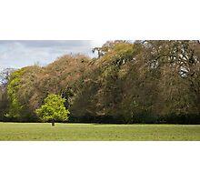 Fairy tree in Ireland Photographic Print