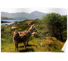Scruffy donkeys Poster