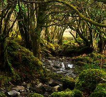 Fairy wood by Karin  Funke