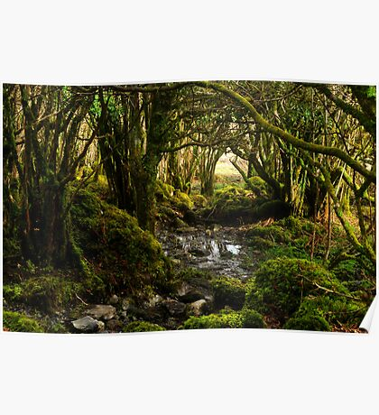 Fairy wood Poster