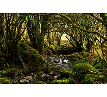 Fairy wood Photographic Print