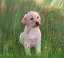 Yellow Lab Puppy in Training by Angela Stanton