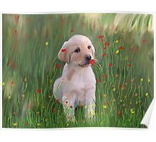 Yellow Lab Puppy in Training Poster