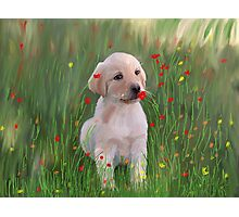 Yellow Lab Puppy in Training Photographic Print