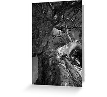 Scary Tree- Golding Vineyard Greeting Card