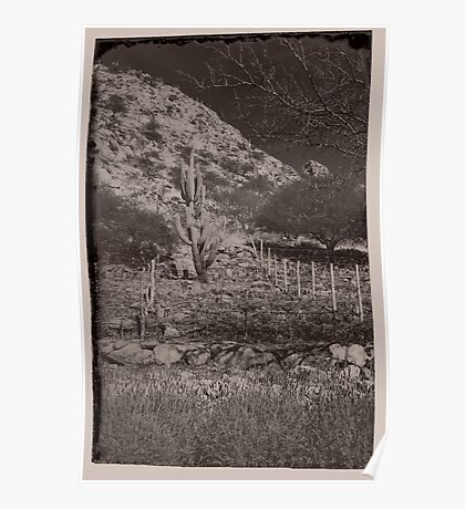 Cactus in the Vineyard - antique style Poster