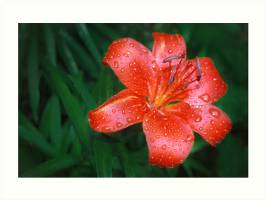 After the Rain by Nadya Johnson