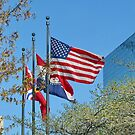 Flags in St.Louis by AnnDixon