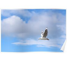 Seagull flying in sky Poster