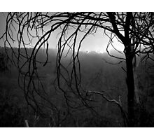 Scary Tree- Gunbower Track Photographic Print