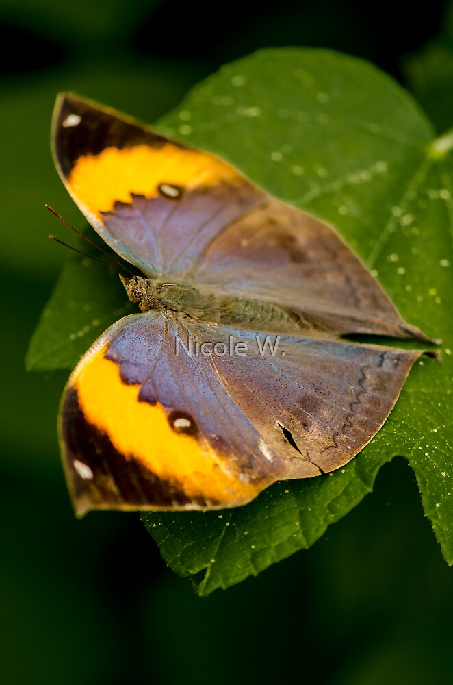 Large butterfly by Nicole W.