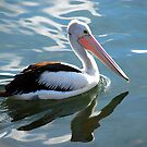 pelican reflections by Glen Johnson