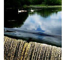 Swan Lake... Photographic Print