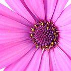 Purple flower by gianliguori