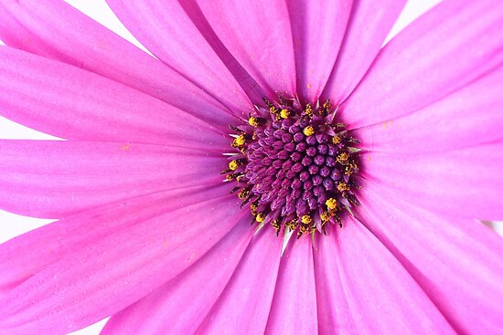 Purple flower by gianliguori