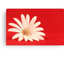 White flower in red background Canvas Print