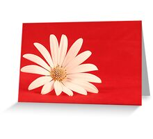 White flower in red background Greeting Card