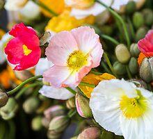 poppies by Justine Gordon