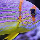 Colorful fish by gianliguori