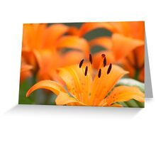 Stand Out And Be Noticed! Greeting Card