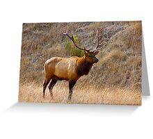Elk bull Greeting Card