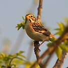Singing Sparrow by Kathi Arnell