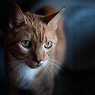 Cat Debonair by Peter O'Hara