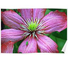 Bug hopper on clematis Poster
