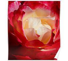 A Unique Rose Poster