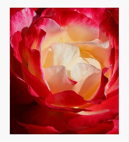 A Unique Rose Photographic Print