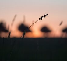 Summer Glow by Michael Gray