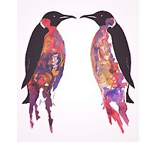 Penguins in Pink Photographic Print