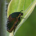 June Bug by Karen Harrison
