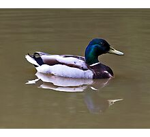 Duck with a reflection Photographic Print