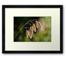 Quaking Grasses ~ Briza Media 3 Framed Print