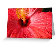 Hibiscus 1 Greeting Card