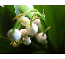 Little bells of Muguet Photographic Print