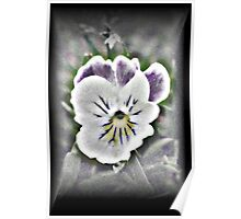 Artistic Pansy Poster