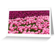 Pink Beauties Greeting Card