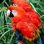 Scarlet Macaws by Henrik Lehnerer