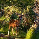 Deer Enchanted by JamesA1