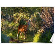 Deer Enchanted Poster