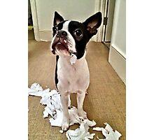 Nope, it definitely wasn't me! Photographic Print