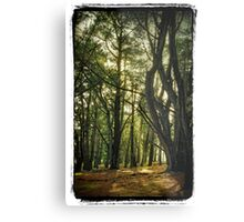 Forest Glen Metal Print