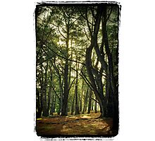 Forest Glen Photographic Print