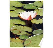 Water Lily  - Orton Effect Poster